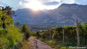 Bioweinbau in Südtirol – steile Berge, mutige Winzer und ganz viel Leidenschaft