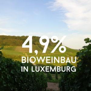 Bioweinbau in Luxemburg