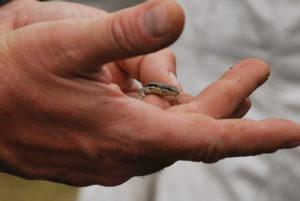 Vielfältige Weinbergslagen schützen heißt Arten schützen